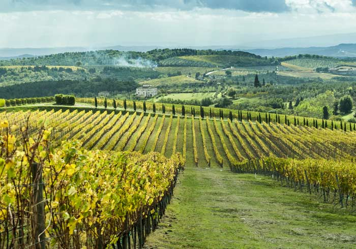 Chianti Vineyard – Tuscany Honeymoon packages with Travelive
