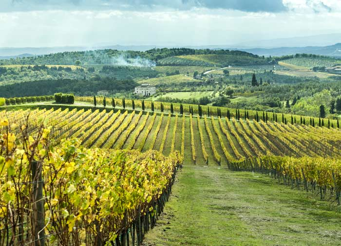 Vineyard in Chianti – Tuscany, Rome Tuscany vacation experience with Travelive, luxury travel